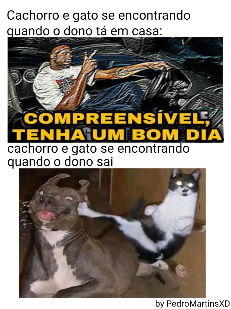 Cão e gato - meme