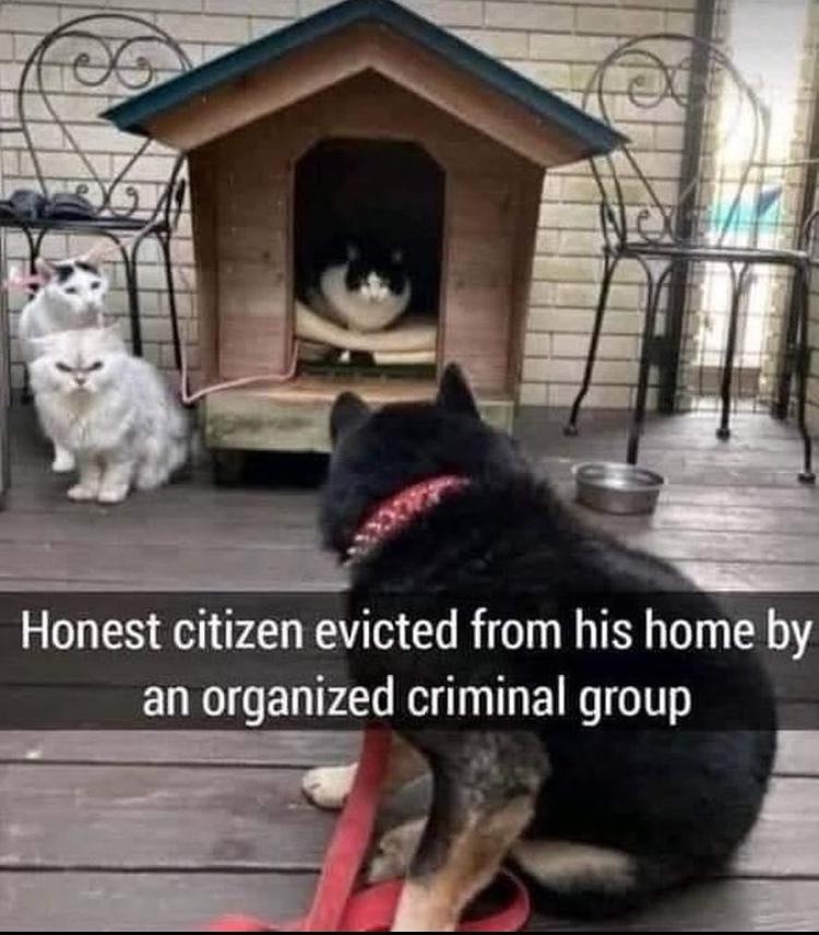 criminals - meme