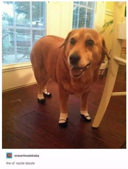 Doggo has dainty feet - meme