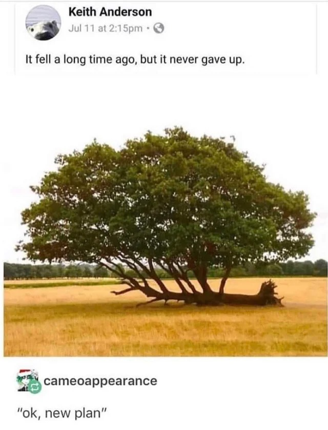 Trees will persevere - meme