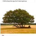 Trees will persevere