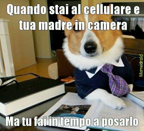 Cani belli - meme