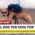 Doggo is ok meme, not best, but better than dat boi
