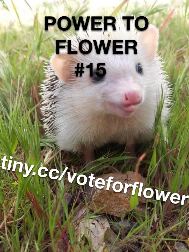 RIGGING THE VOTES FOR FLOWER - meme