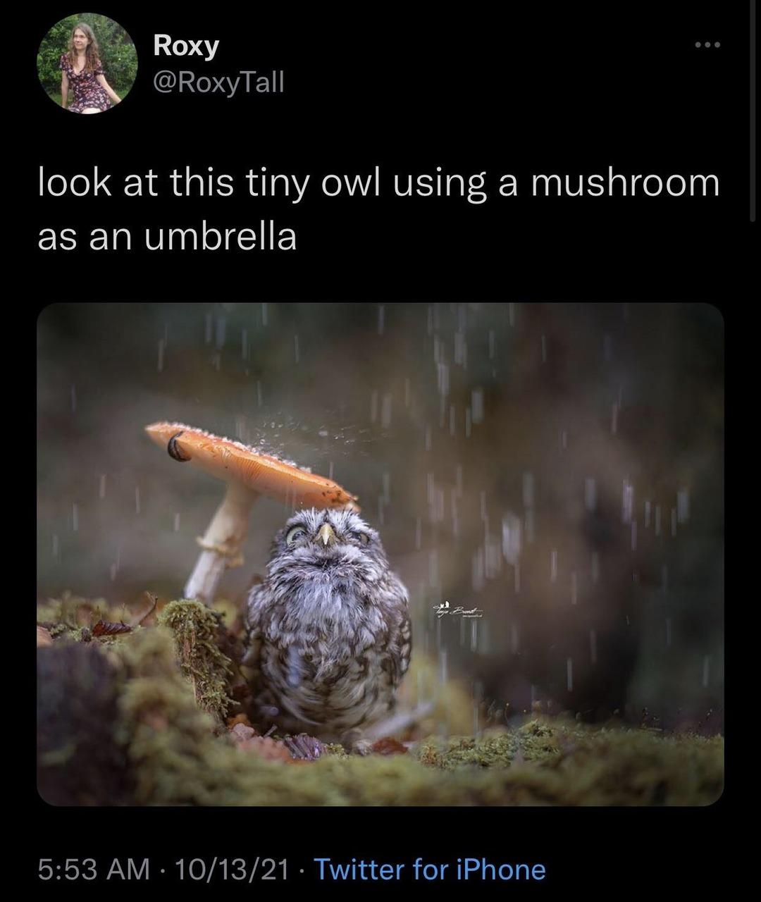 it's raining - meme