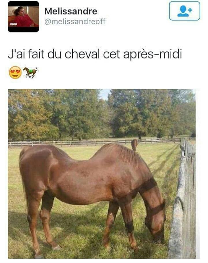 Le cheval c'est trop génial - meme