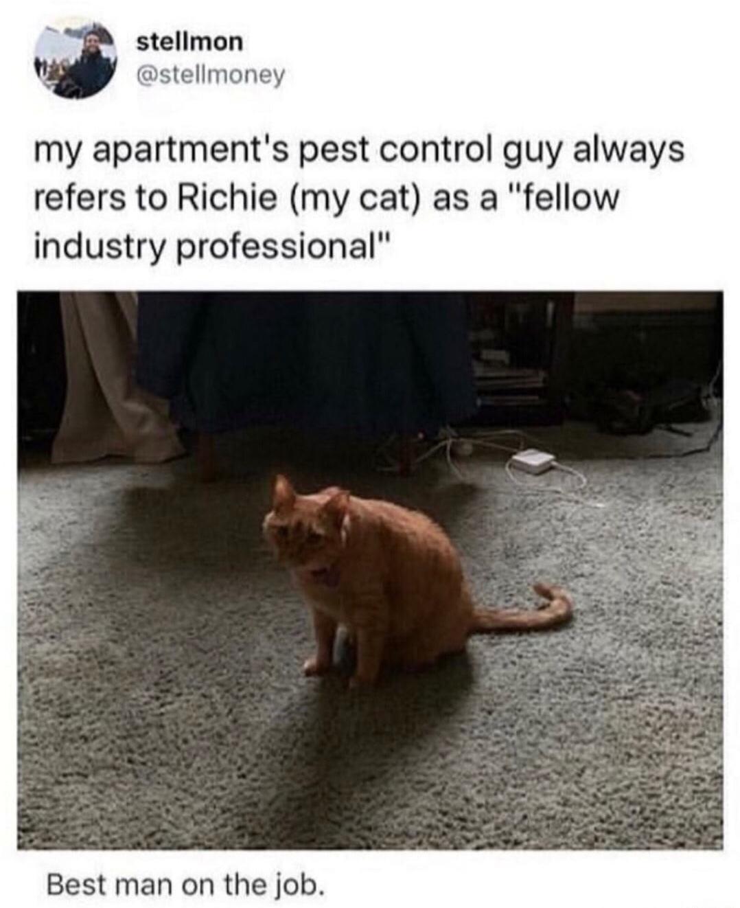 best man on the job - meme