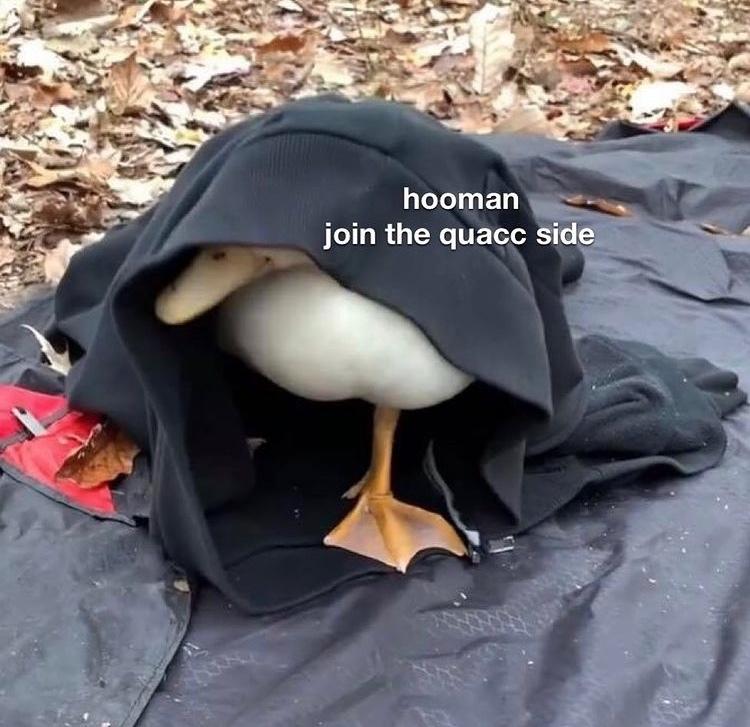 quacc side - meme