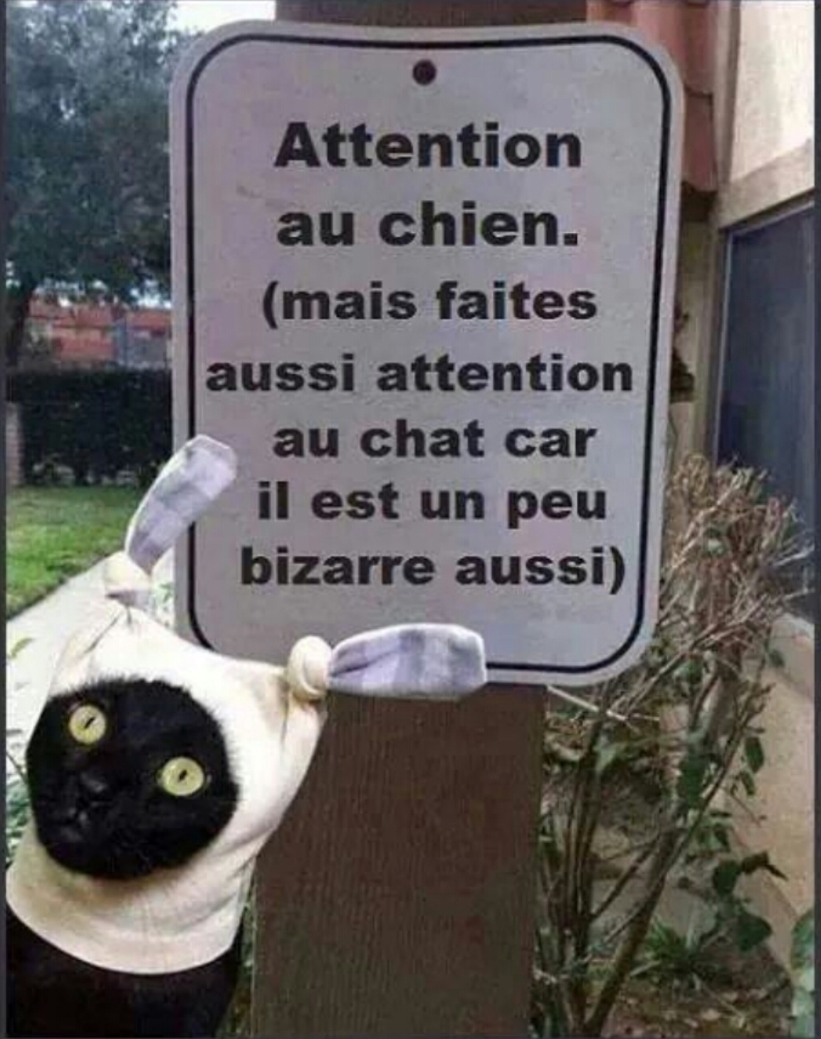 attention au chien ! - meme