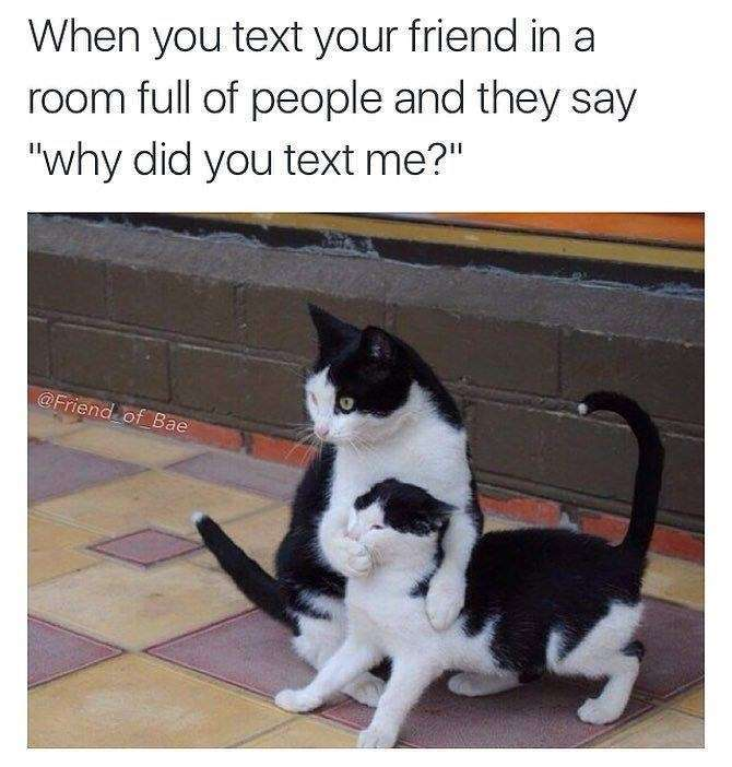 Why did you text me | gagbee.com - meme