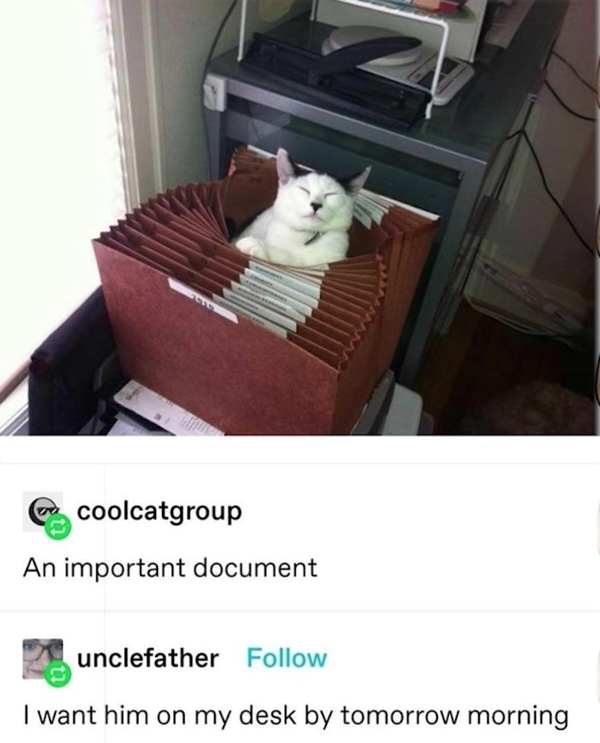 very important document - meme
