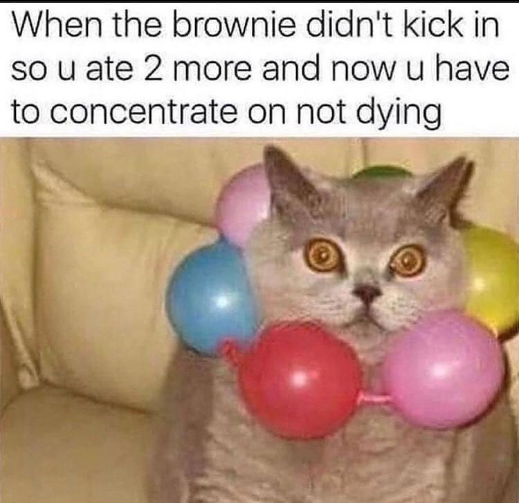 cat is having Vietnam flashbacks - meme