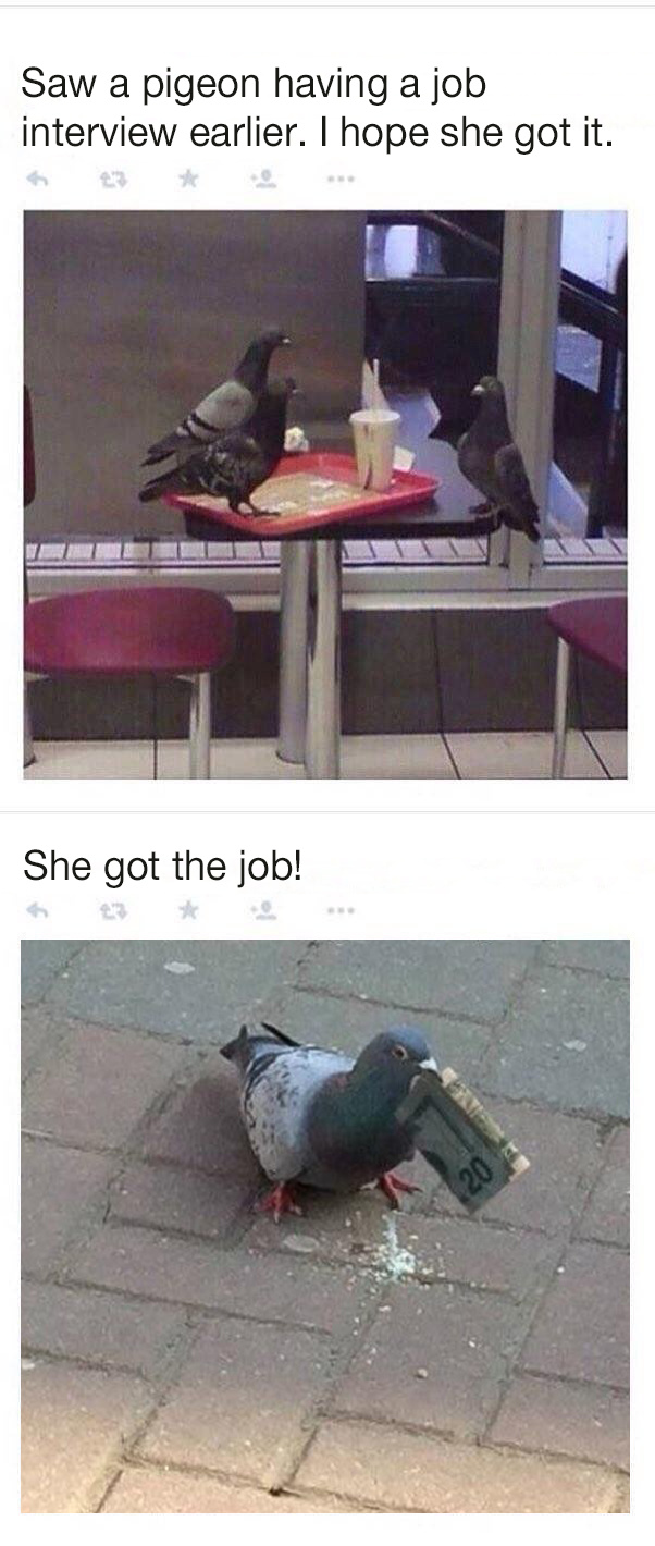 Business pigeon - meme