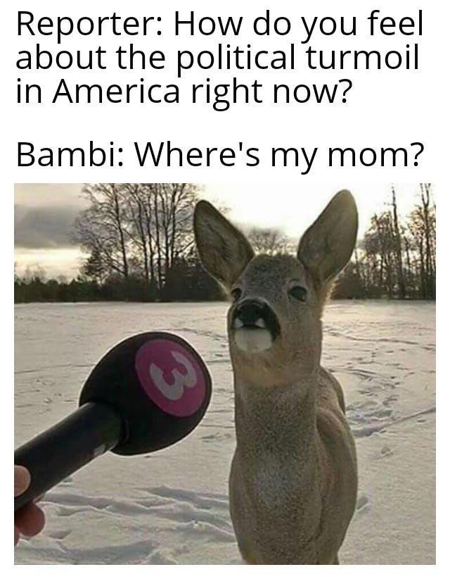 bambi is lost - meme