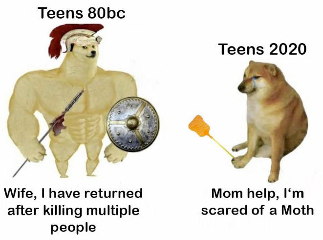 daily doge memes