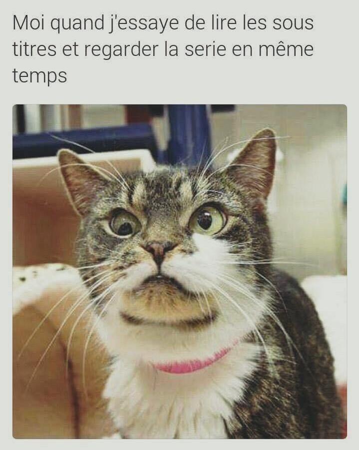 Blbl. - meme