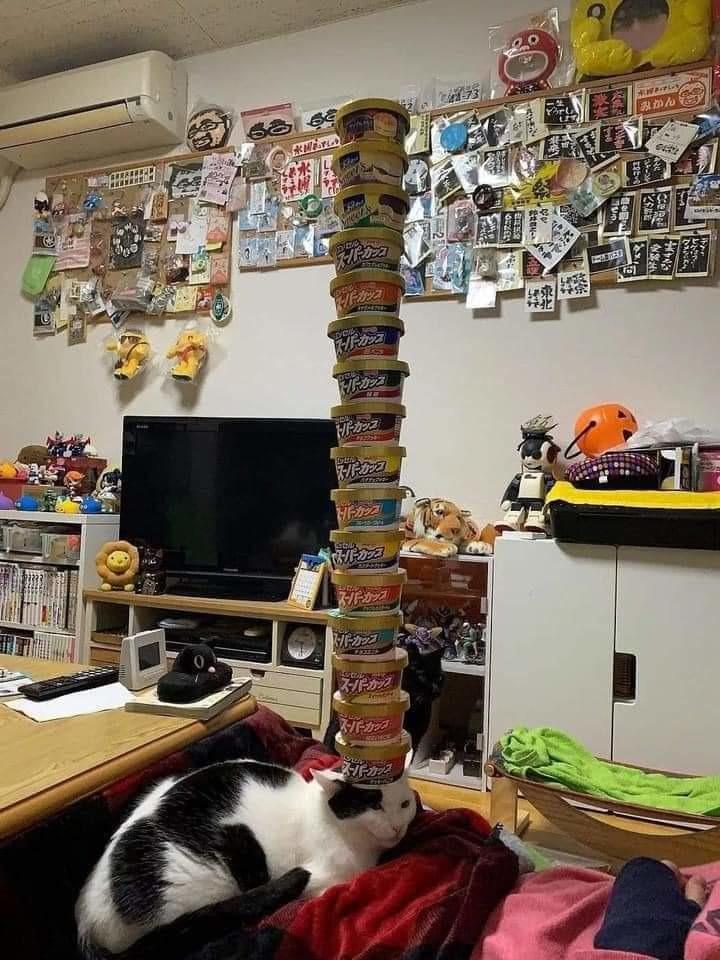Pillar cat - meme