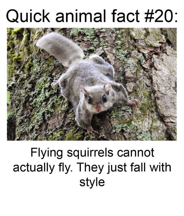 Fun fact about flying squirrels - meme