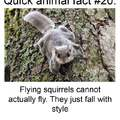 Fun fact about flying squirrels