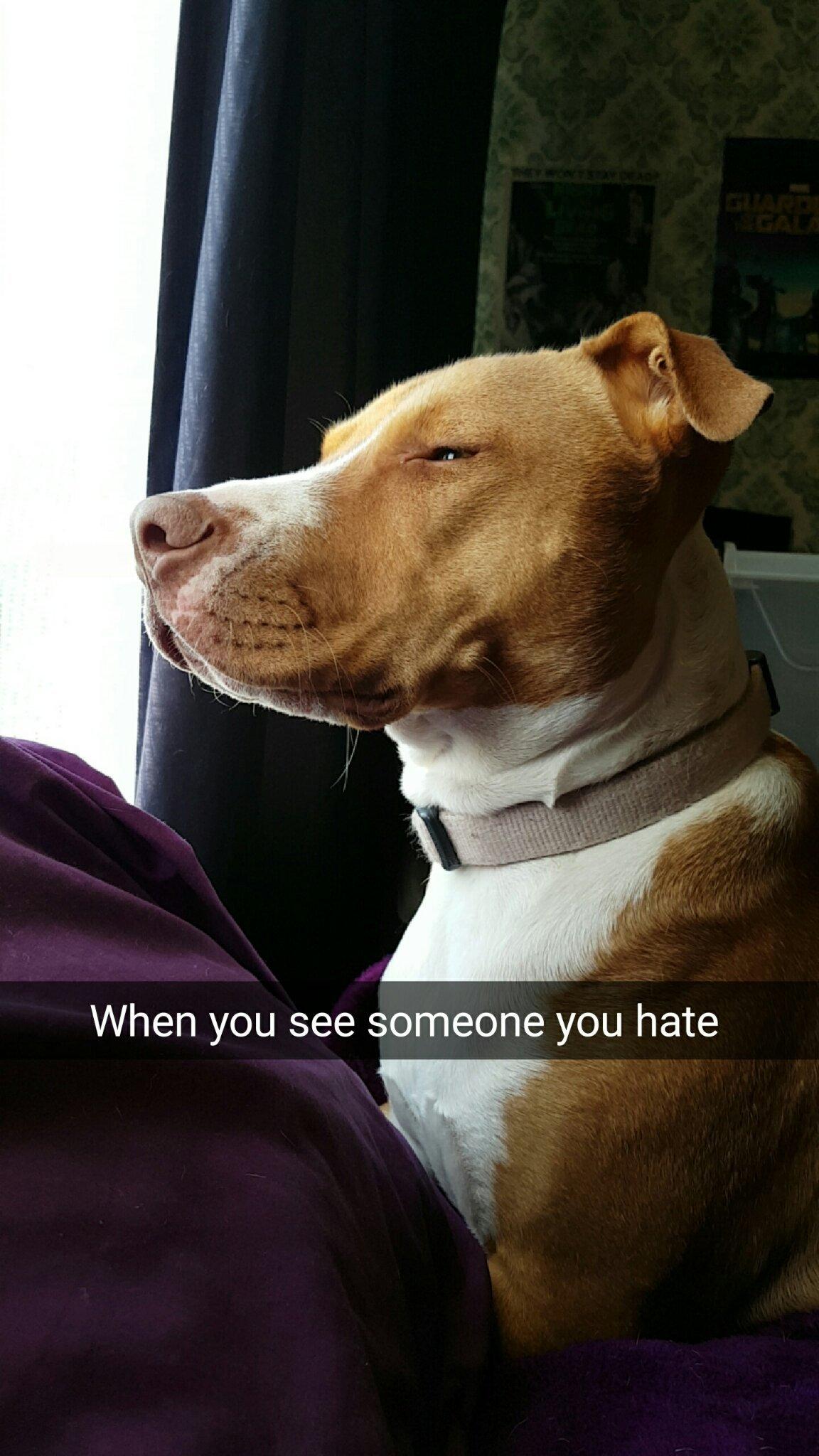 My dog LET IT PASS - meme