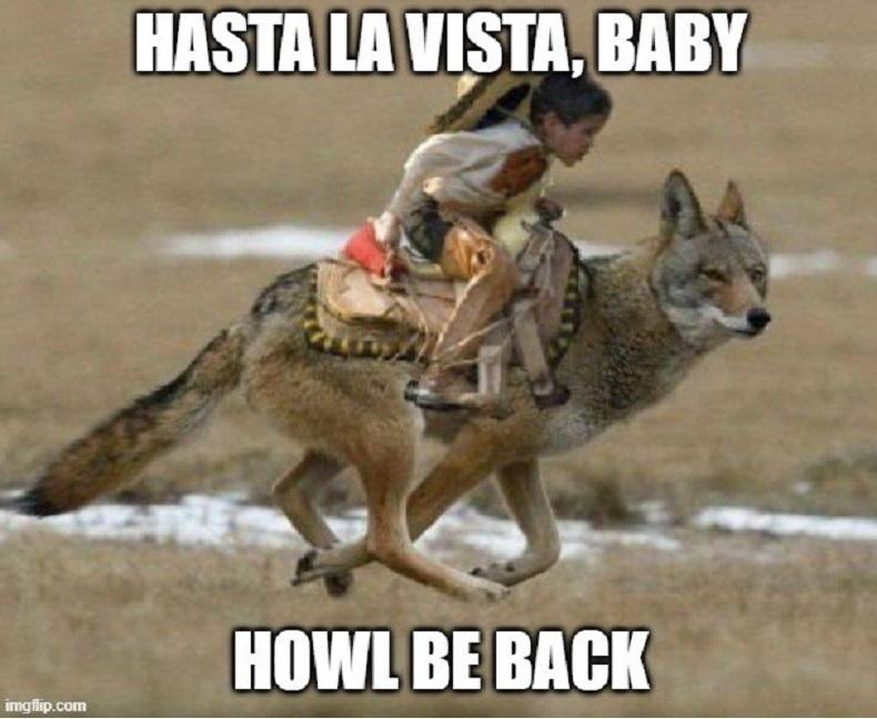 Coyotes - meme