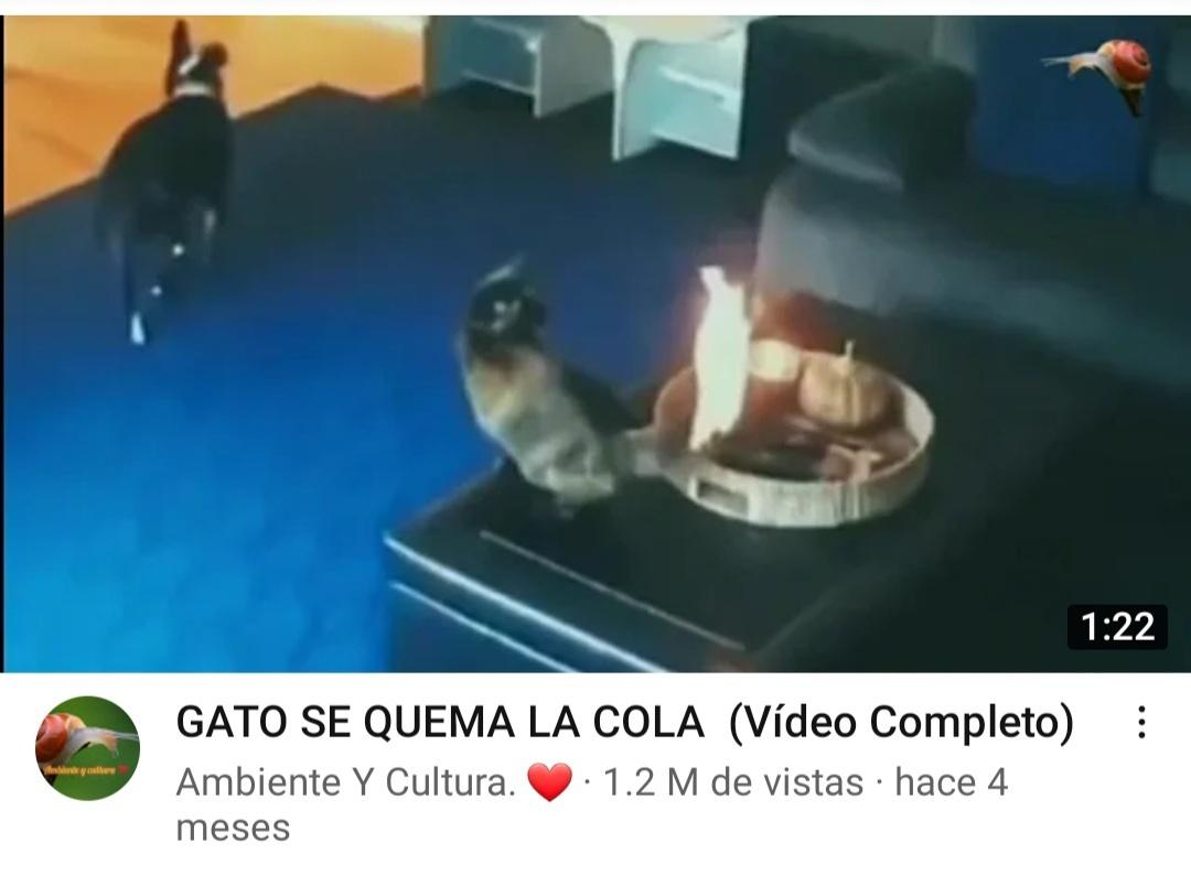 El video en si el gato no sufrio - meme
