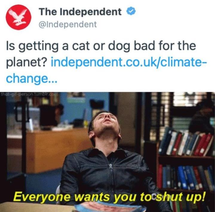 Pets - meme