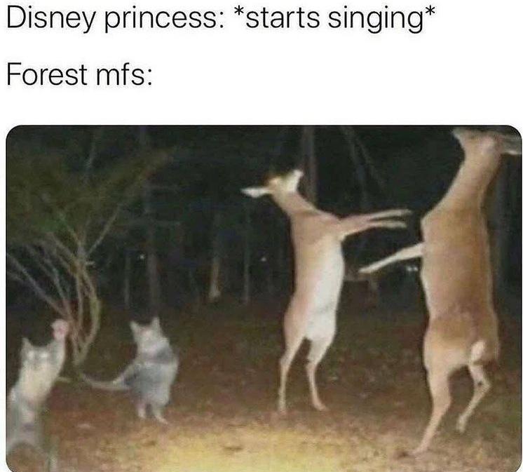 dancing or fighting - meme