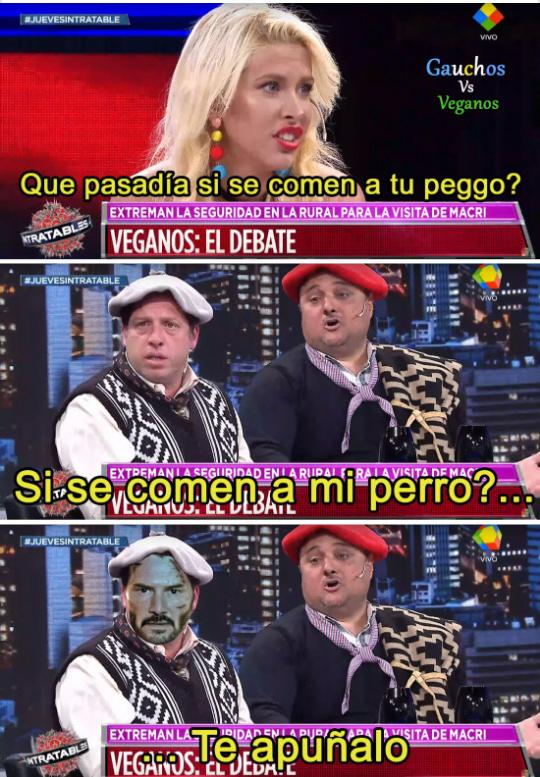LOS PITBULL MÁS PIJUDOS PROVIENEN DE ARGENTINA - meme