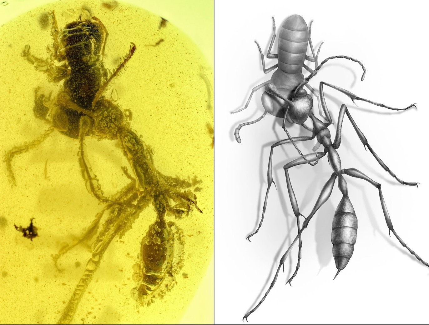 @zachary_77 posted one few days back here another 90 odd million year old bug in amber - meme