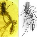 @zachary_77 posted one few days back here another 90 odd million year old bug in amber
