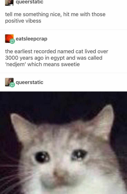 I think I'm posting a ton of cat memes now