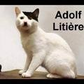 Si les nazis étaient des chats... ^-^