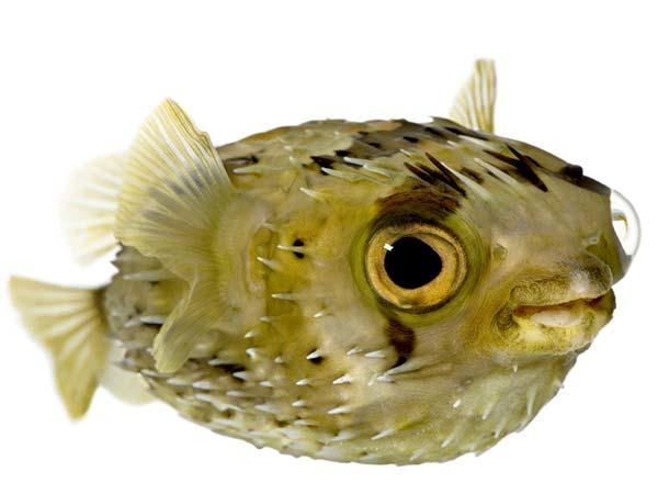 Just a weird fish - meme