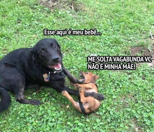 Cachorros #2 - meme