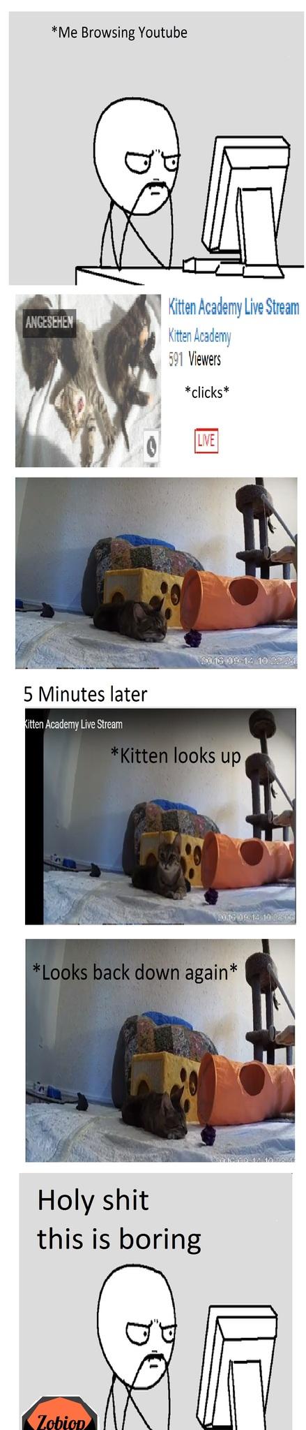 Cat Academy - meme