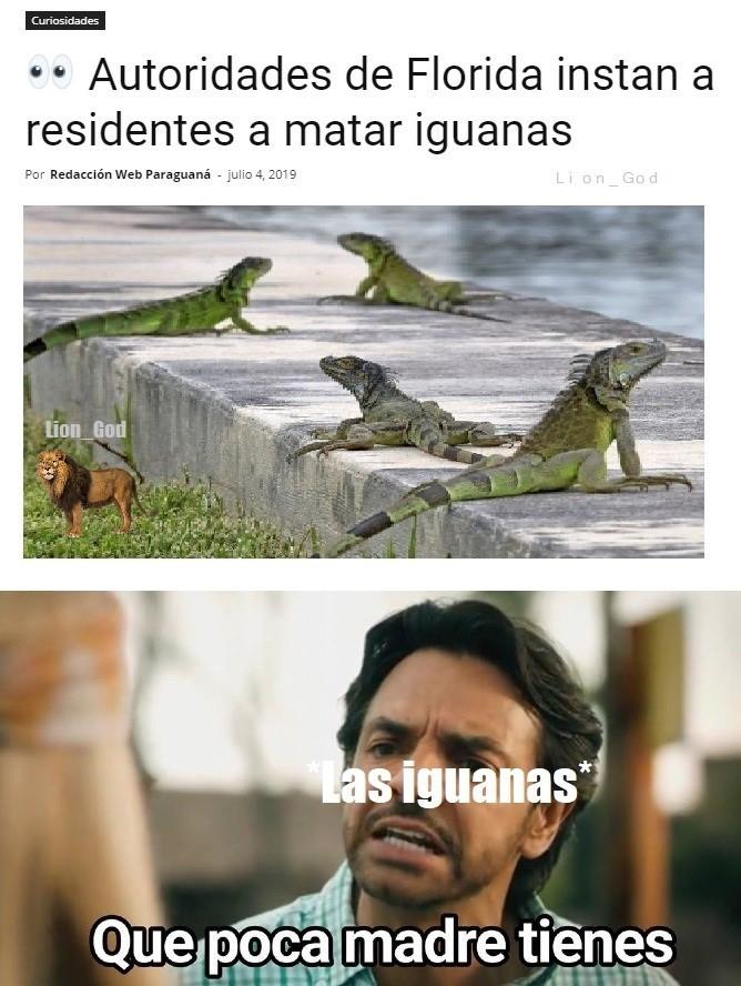 El reptil del logo de novagecko es una lagartija, iguana? - meme