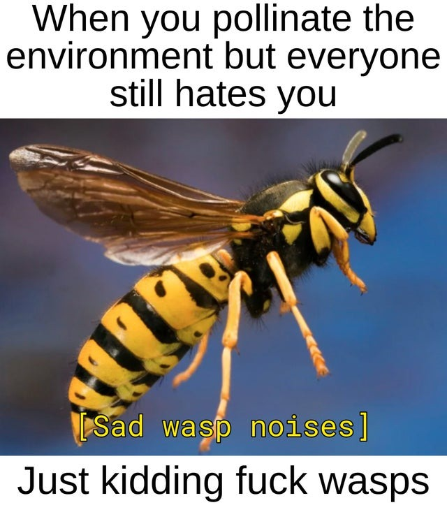 Fuck wasps - meme