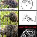 wtf spiders