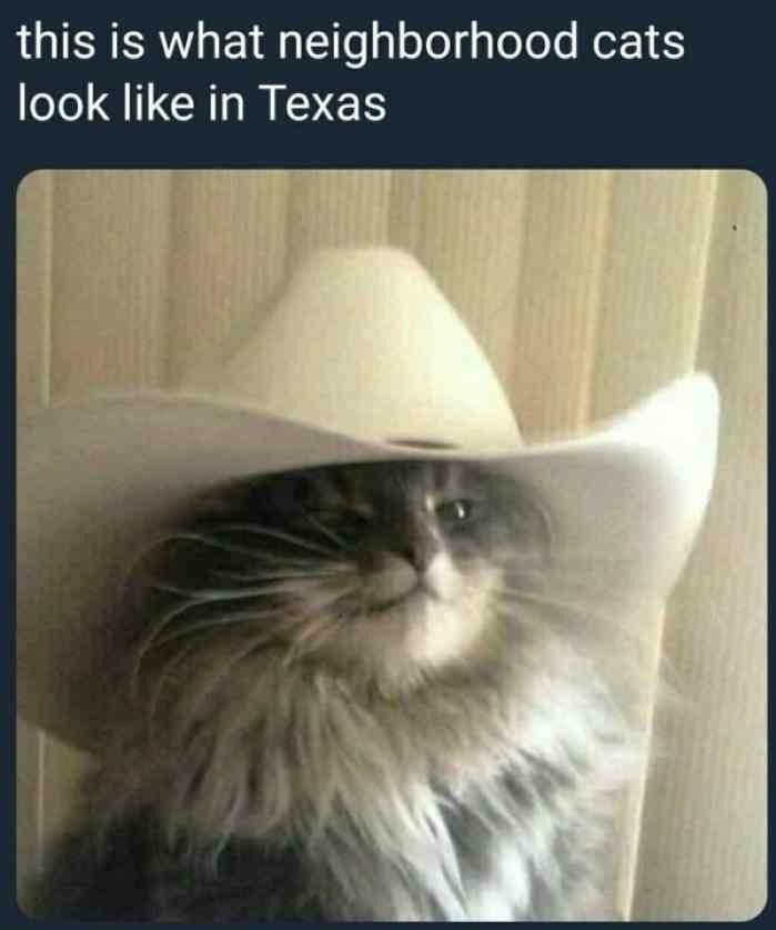 Texan cat in the hat - meme