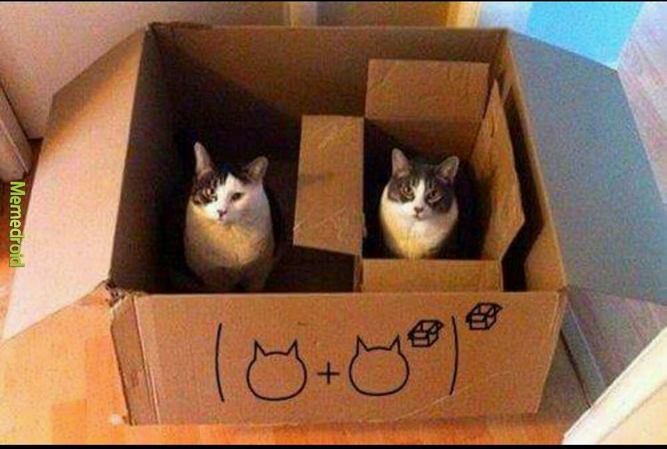 Cat maths - meme