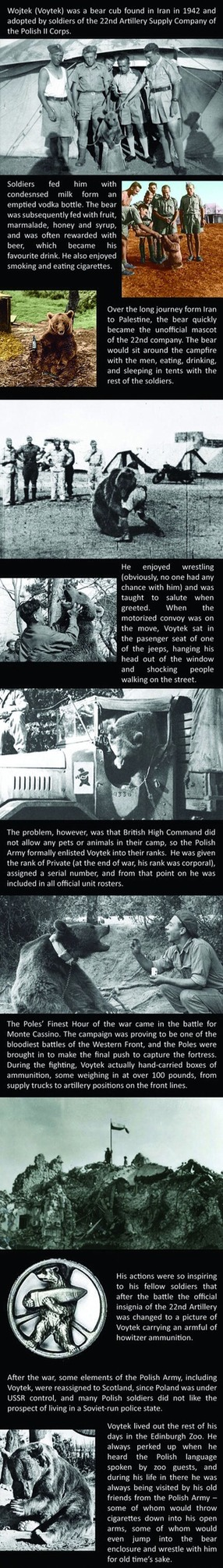 tl;dr: A bear became a Polish soldier in WWII - meme