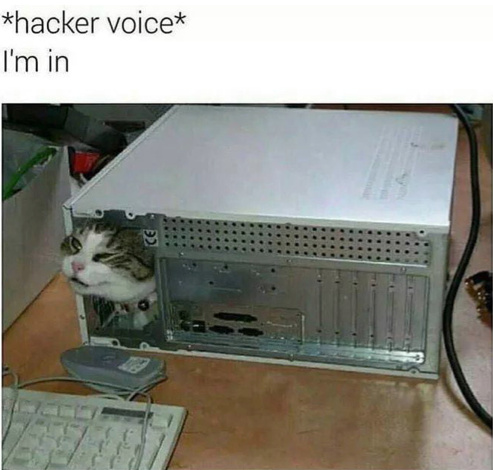 Hacker Cat - meme