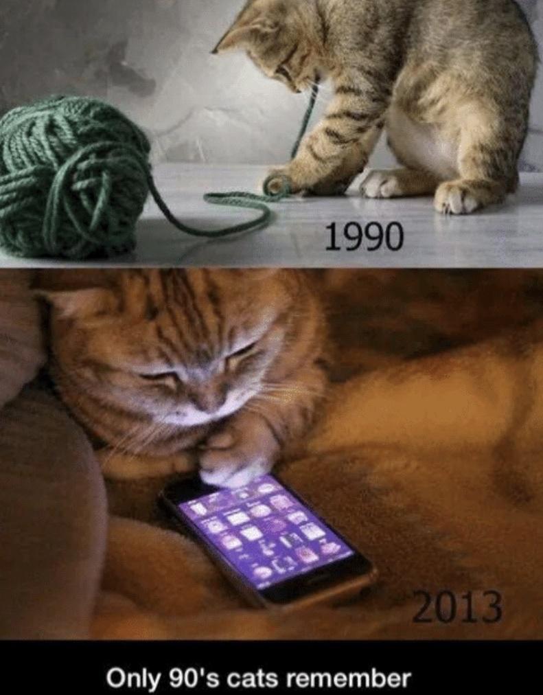 90's cats - meme
