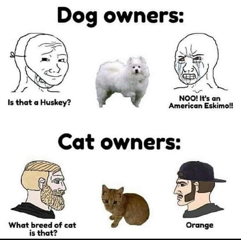 I love my pussies - meme