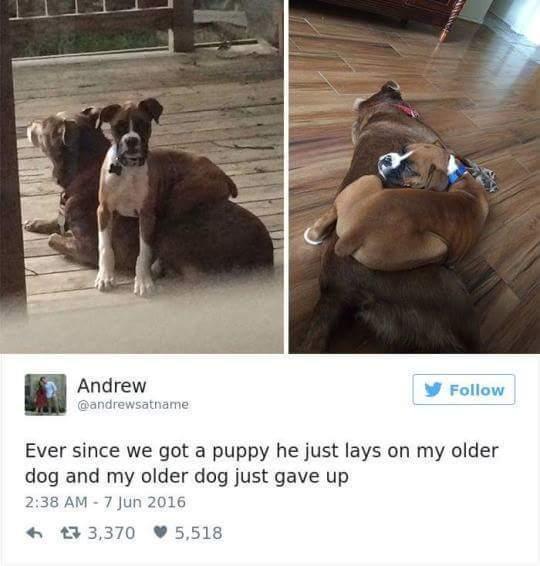 Big doggo needs 6naps per hr XDDD - meme