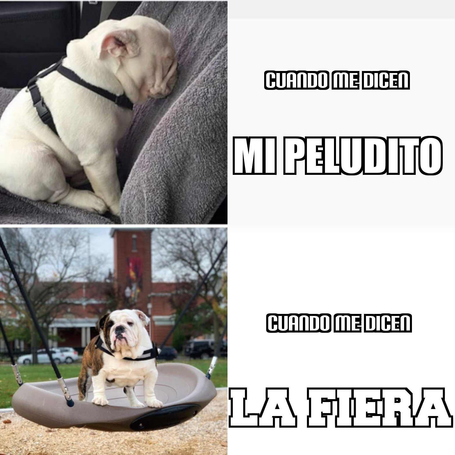 Perro triste - meme