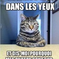 Les photo de chats